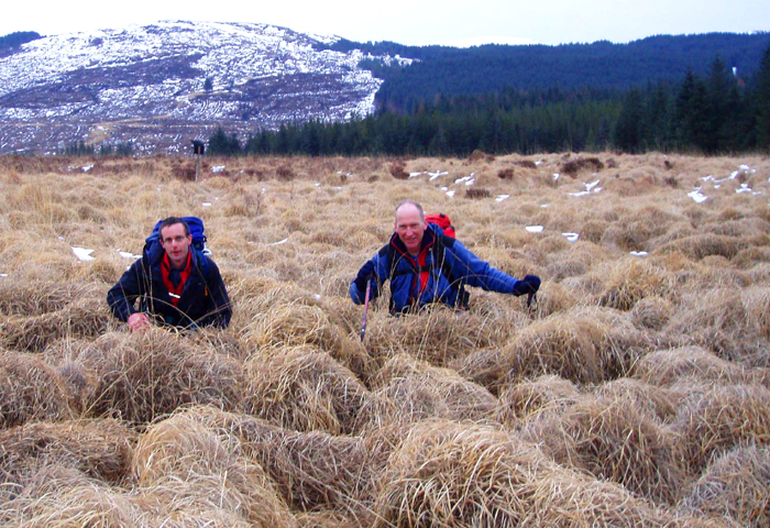 "Giant tussock grass, Sliver Flowe, Galloway, known locally as ""Dougals"", Winter 2006"